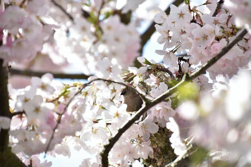 Bushtit is in het bloembed stock afbeeldingen