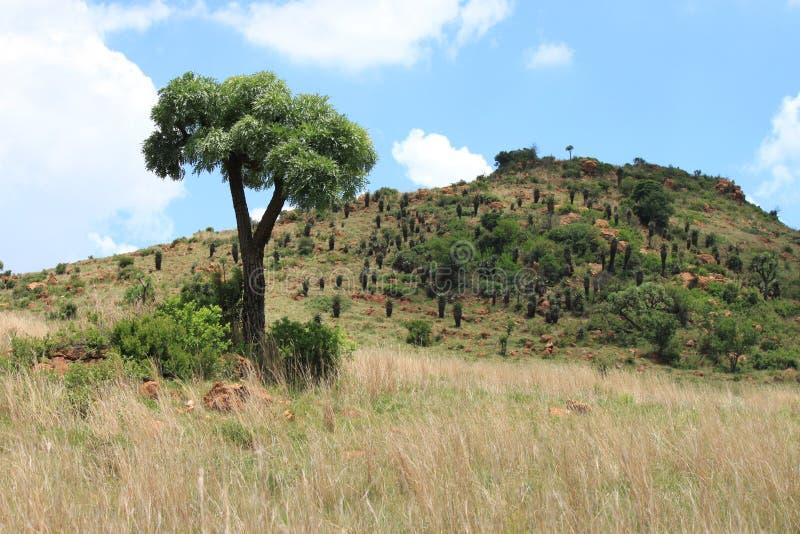 Bushveld image stock