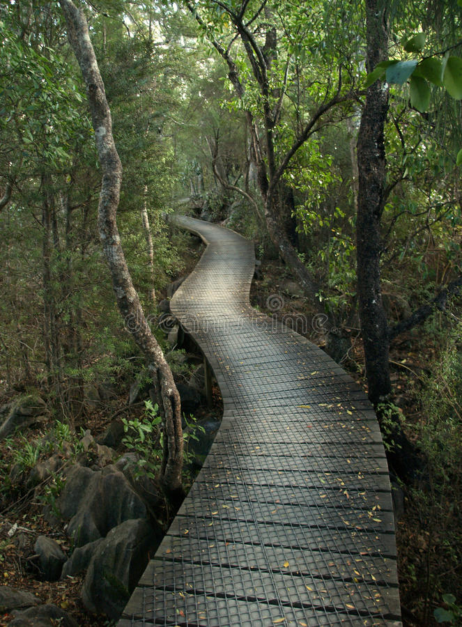 Bushwalk, Nuova Zelanda immagine stock