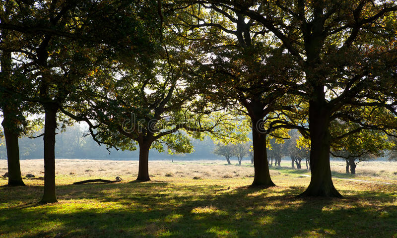 Bushy Park, Middlesex. Bushy Park is the second largest of Londons Royal Parks, at 1,100 acres in area and lies immediately north of Hampton Court Palace and stock photo