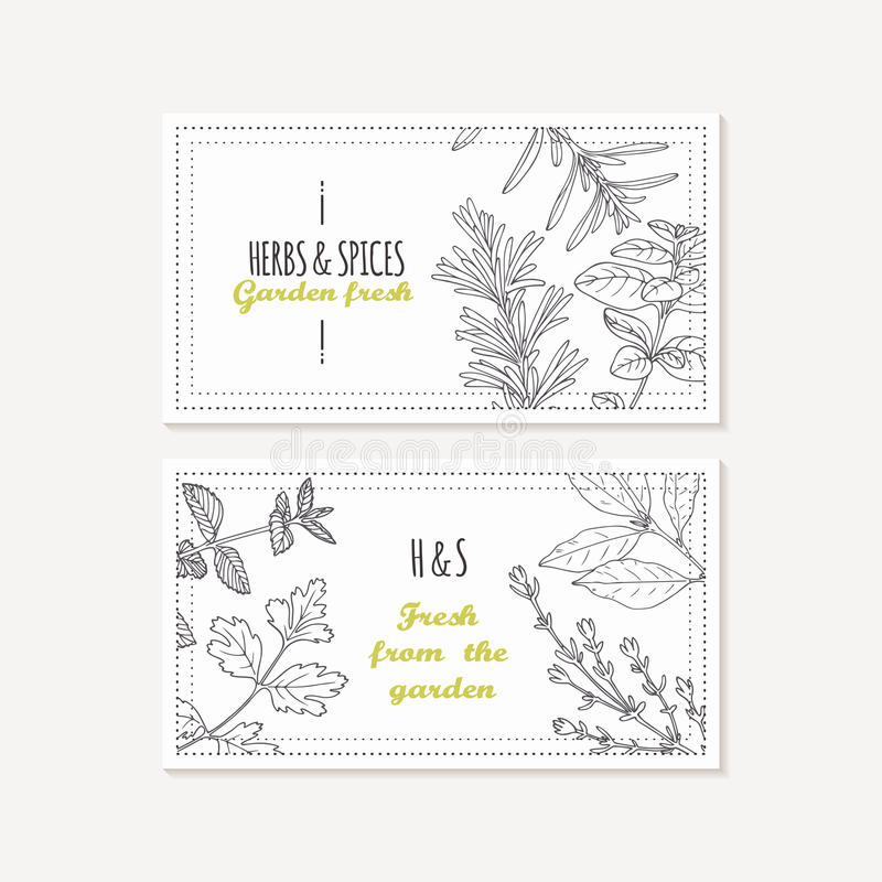Business card templates set with hand drawn spicy herbs. Sketched food background. Vector illustration stock illustration