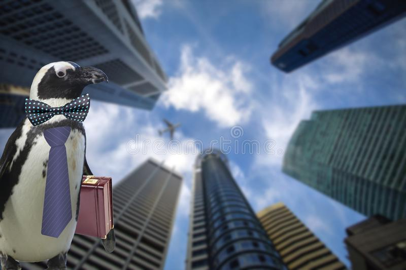 Business concept of a funny penguin wearing a tie and suitcase standing under some big sky scraper building and airplane flying by stock photo