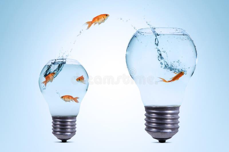 Gold fish jumping out from a smaller aquarium to bigger aquarium stock photos