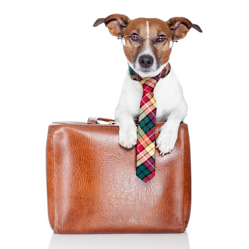 Business dog royalty free stock photos