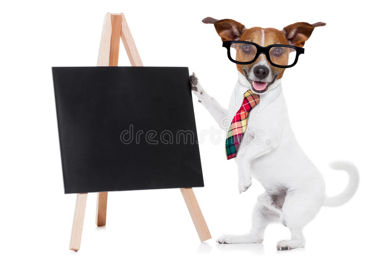 Business dog with blackboard stock photo