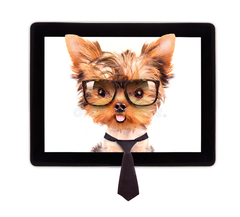 Business dog on a digital tablet screen stock photo
