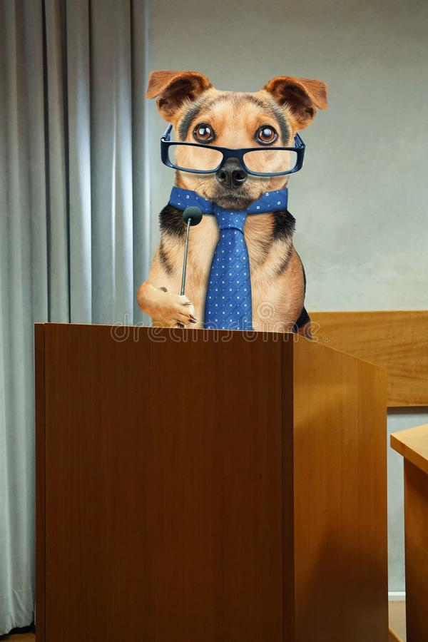 Business dog having public speaking at Podium pulpit with microphone stock photos