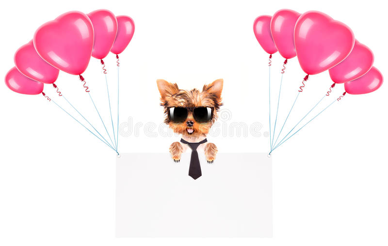 Download Business Dog Holding Banner With Balloons Stock Photo - Image: 36712338