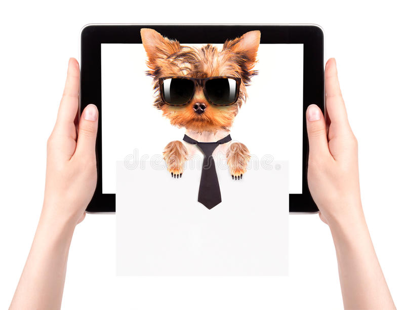 Business dog holding banner on a tablet screen