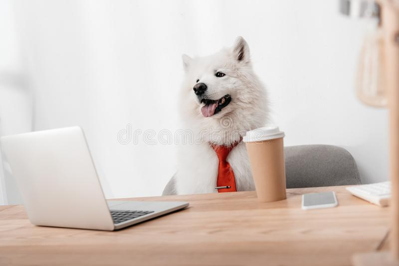 Business dog with laptop. Business dog in red necktie working with laptop in office royalty free stock photos