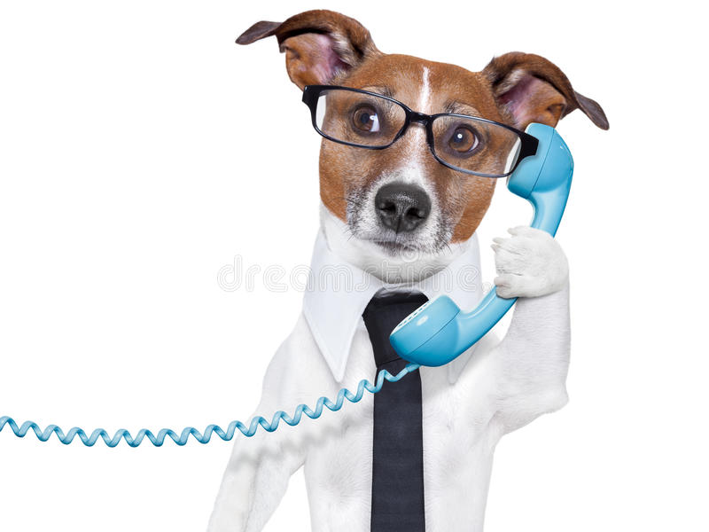 Business dog on the phone royalty free stock photos