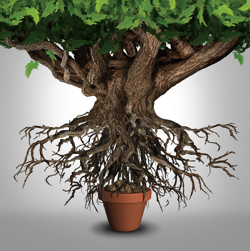 Business Expansion. And too big to manage business that does not fit metaphor or expanding outgrowing your home concept as a large tree with a small plant pot royalty free illustration