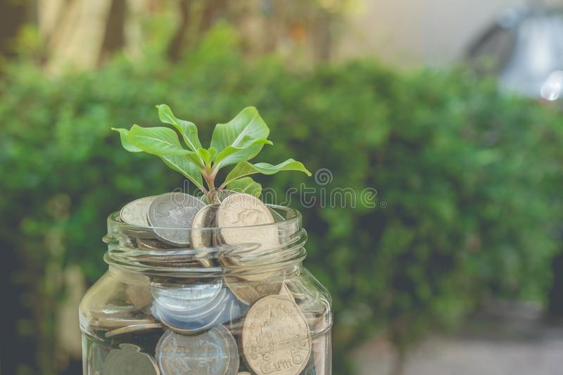 Business and financial concept: green sprout tree growing through money coins in savings money glass jar. Business and Financial Concept : Green sprount tree stock photo