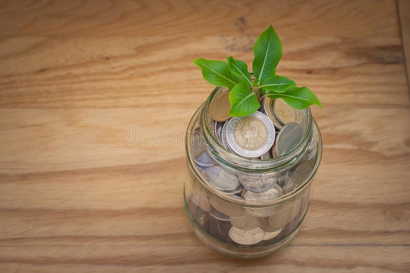 Green sprount tree growing through money coins in savings money glass jar setting on wooden floor. stock images