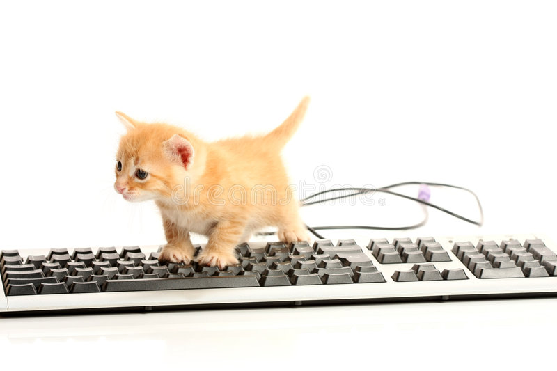 Download Business Kitten Working On Keyboard Stock Photo - Image: 7238852