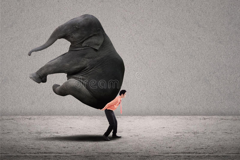 Business leader lifting elephant on grey stock photo