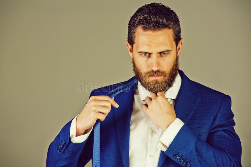 Business man with beard, formal fashion, marketing, man. On grey background, copy space royalty free stock image