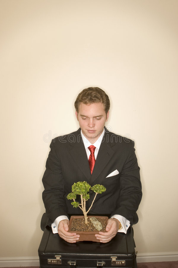 Business man with bonsai 2 royalty free stock photos