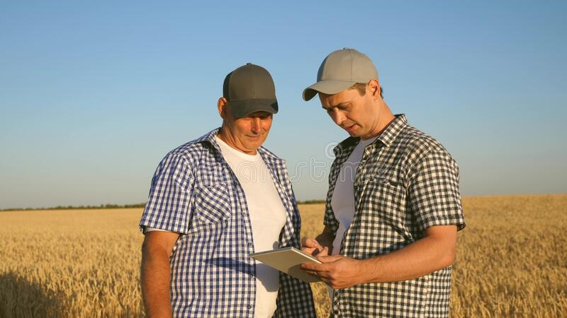 Business man checks quality of grain. farmer and businessman with tablet working as a team in field. agronomist and royalty free stock images