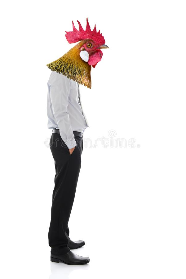 Business man with chicken head. Isolated on white background royalty free stock photos