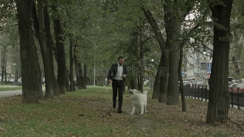 Business man running with playful big white dog in the green city park stock image