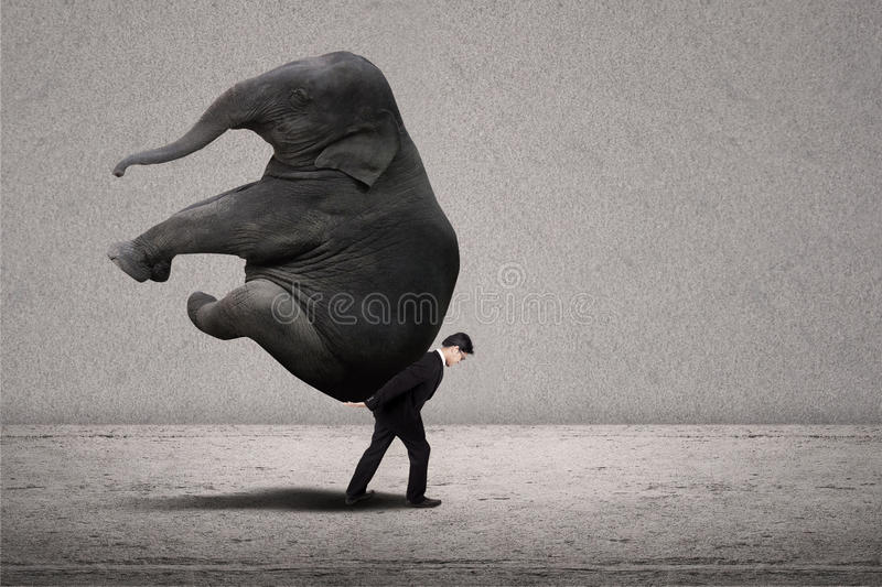 Business manager carry elephant on grey - leadership concept. Business manager with suit lifting elephant on grey background royalty free stock photography