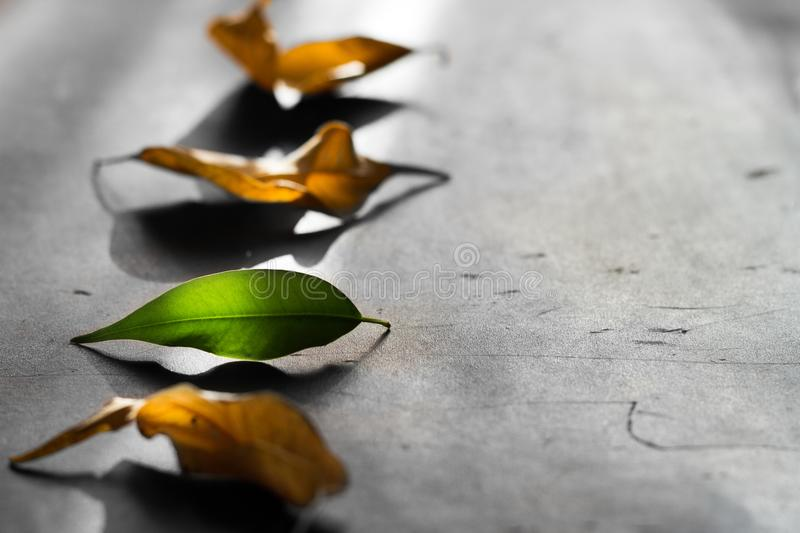 Business metaphor team start up concept with leaves stock photos