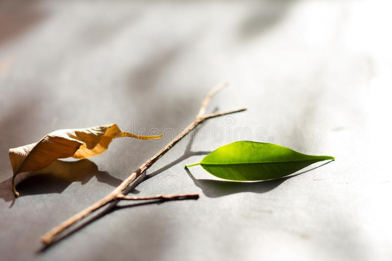 Business metaphor team start up concept with leaves stock photography