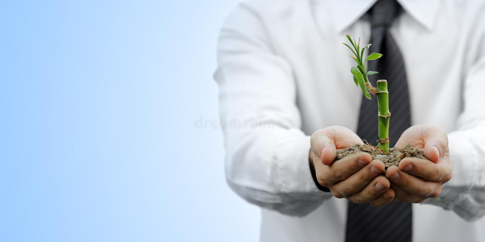Business and nature metaphor royalty free stock photo
