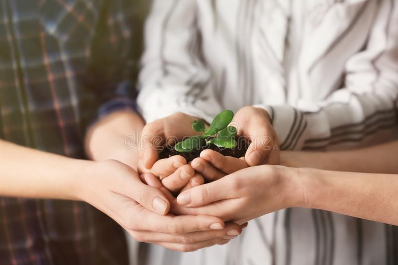 Business people holding green seedling with soil, closeup royalty free stock photo