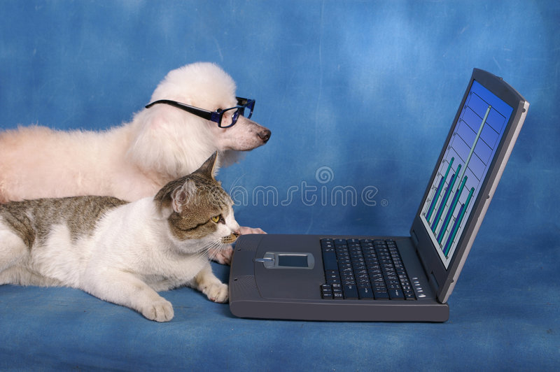 Business pets. Two pets (dog in glasses and cat) looking at business statistics on laptop screen stock photos