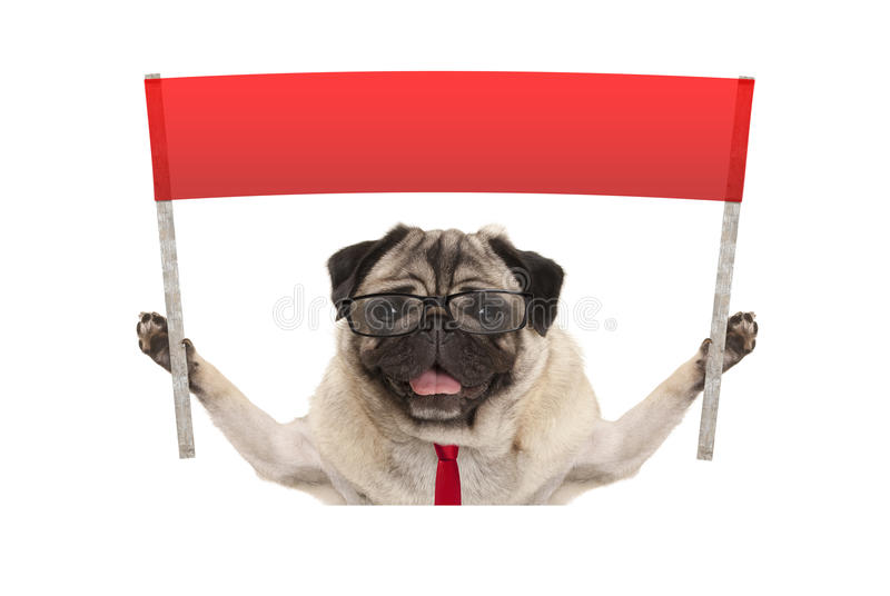 Business pug dog with tie and reading glasses, holding up red banner sign. Isolated on white background stock image