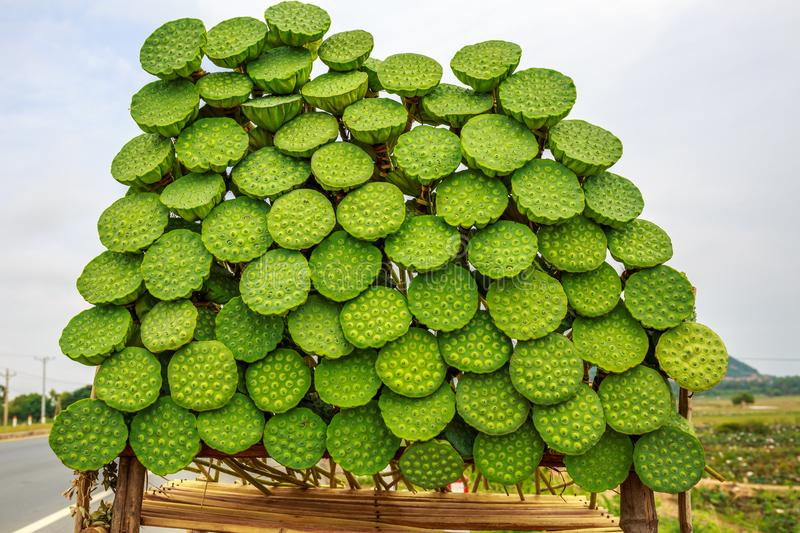 Business of Selling Fresh Lotus Fruit in the Street of Cambodia royalty free stock photos