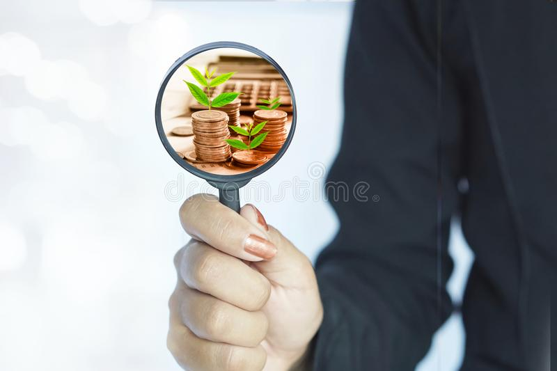 Business success concept background with woman hand holding magnifying glass with coin and tree growing royalty free stock photo