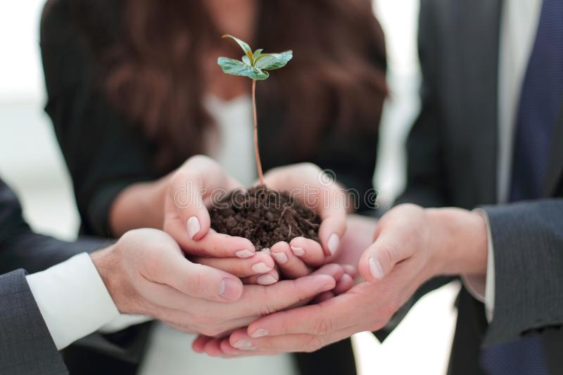Business team holding together fresh green sprout closeup royalty free stock image