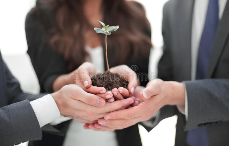 Business team holding together fresh green sprout closeup stock photos