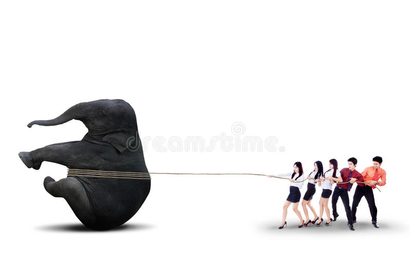 Download Business Teamwork Pulling Elephant Together - Isolated Stock Image - Image of concept, aspirations: 32370785