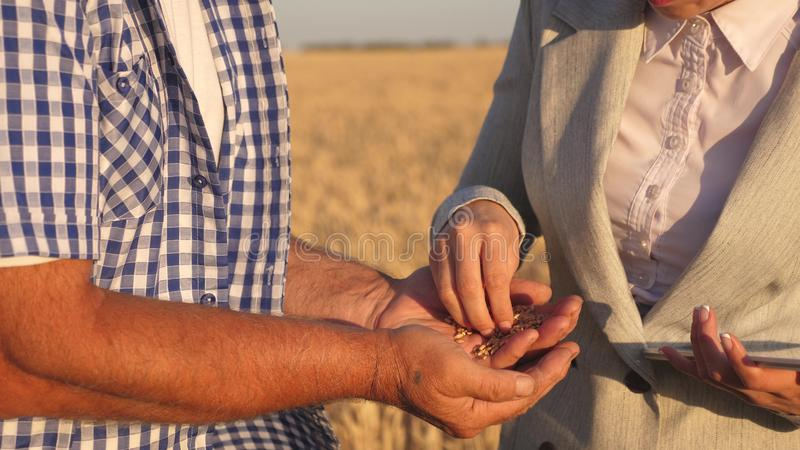 Business woman checks quality of grain in hands of farmer. close-up. business woman with tablet and farmer teamwork in. Business women checks quality of grain in royalty free stock image