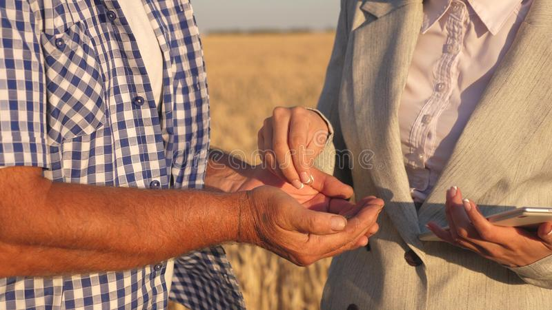 Business woman checks quality of grain in hands of farmer. close-up. business woman with tablet and farmer teamwork in. Business women checks quality of grain in royalty free stock photography
