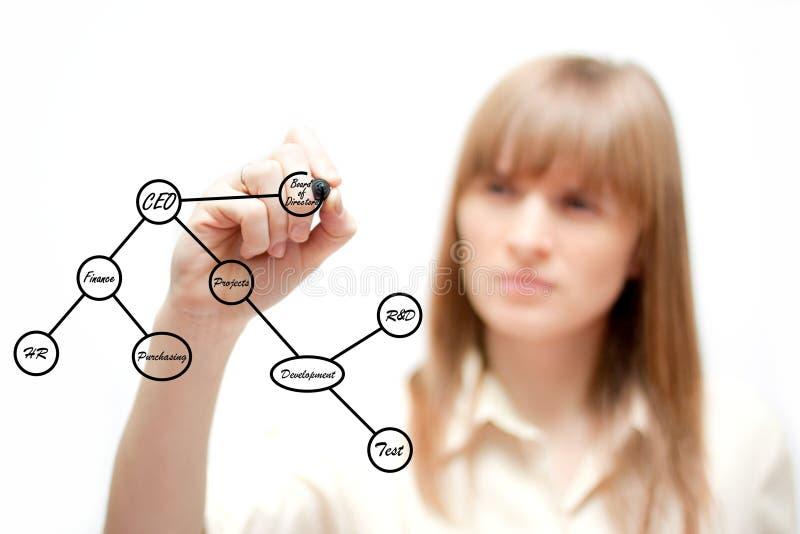 Business woman drawing an organization chart royalty free stock photography
