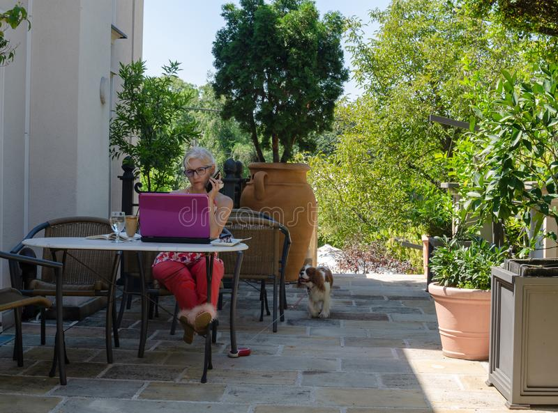 Business woman with her laptop and dog stock image