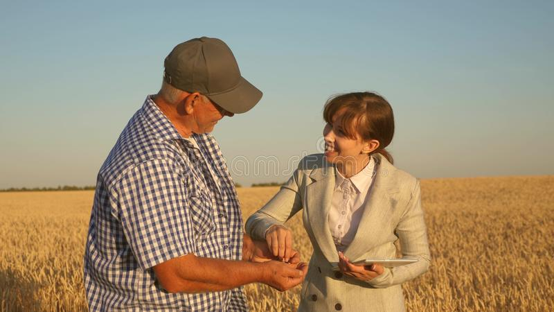 Business woman with tablet and farmer teamwork in a wheat field. farmer holds a grain of wheat in his hands. A business. Business women with tablet and farmer royalty free stock images
