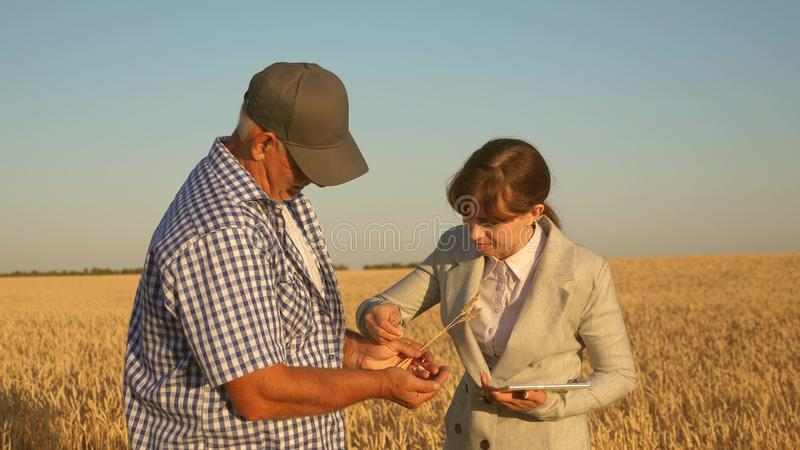 Business woman with tablet and farmer teamwork in a wheat field. farmer holds a grain of wheat in his hands. A business. Business women with tablet and farmer stock image