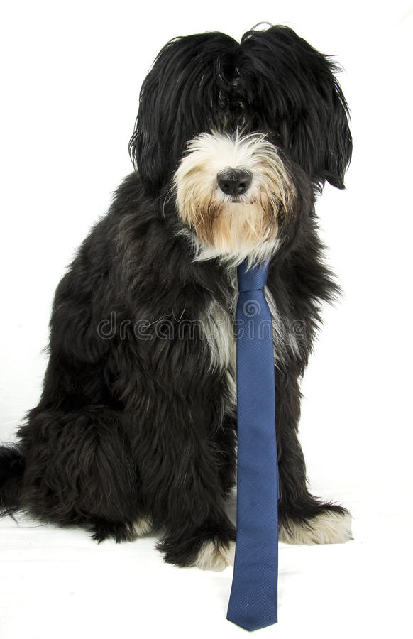 Businessdog royalty free stock images