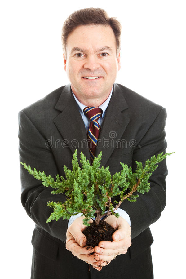 Businessman with Bonsai royalty free stock image