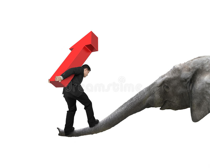 Businessman carrying arrow up balancing on elephant trunk royalty free stock photography