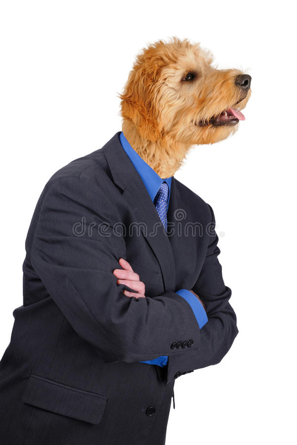 Download Businessman With Crossed Arms And Dog Head Stock Image - Image: 16857113
