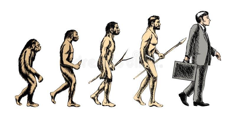 Businessman evolution, vector illustration royalty free illustration