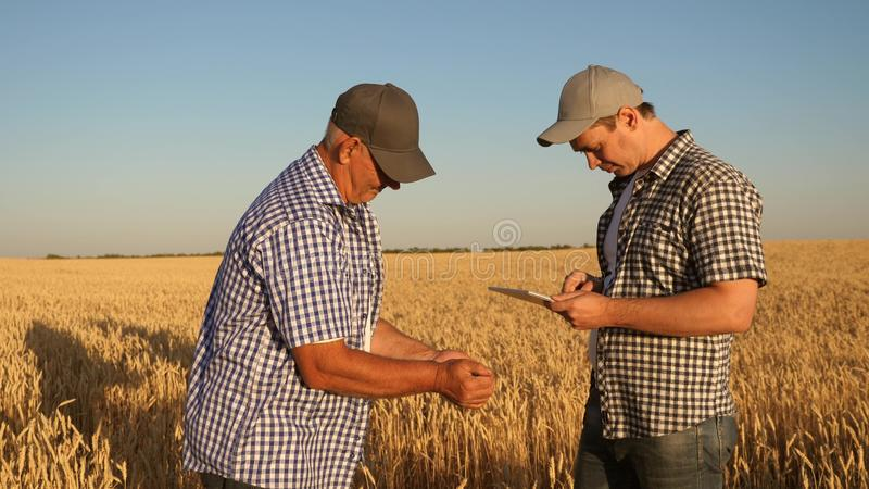 Businessman and farmer with tablet working as a team in the field. agronomist and farmer are holding a grain of wheat in royalty free stock photography