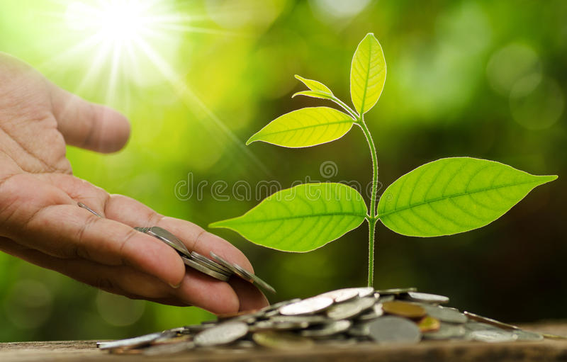 Businessman hand giving and savings money to young tree stock images